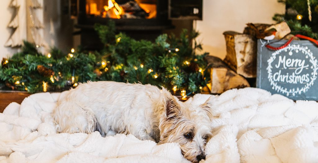 Dog spending Christmas in one of our cottages in Cornwall