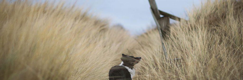 Dog On Dunes Resized