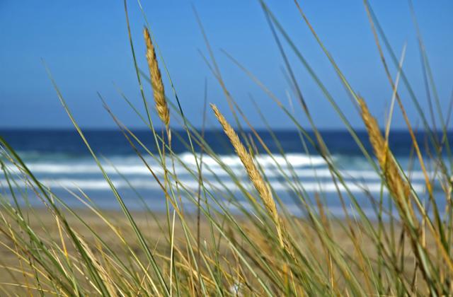 Gwithian beach dunes, Cornwall