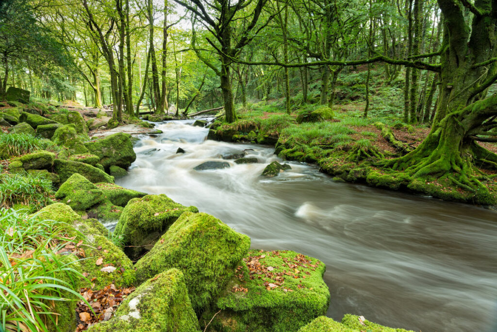 Golitha falls, bodmin, woods, Forever Cornwall