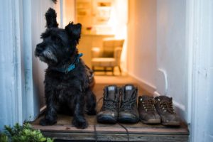 Forever Cornwall Artisan Cottage St Ives Dog Friendly