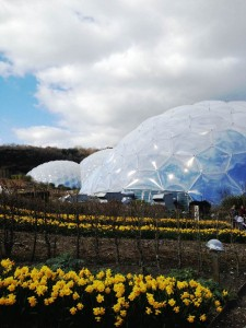 Forever Cornwall Eden Domes And Daffodils