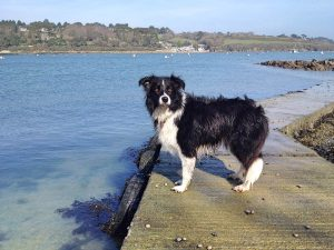 Forever Cornwall Helford Dog Water