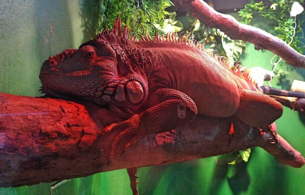 Forever Cornwall Newquay Aquarium Lizard
