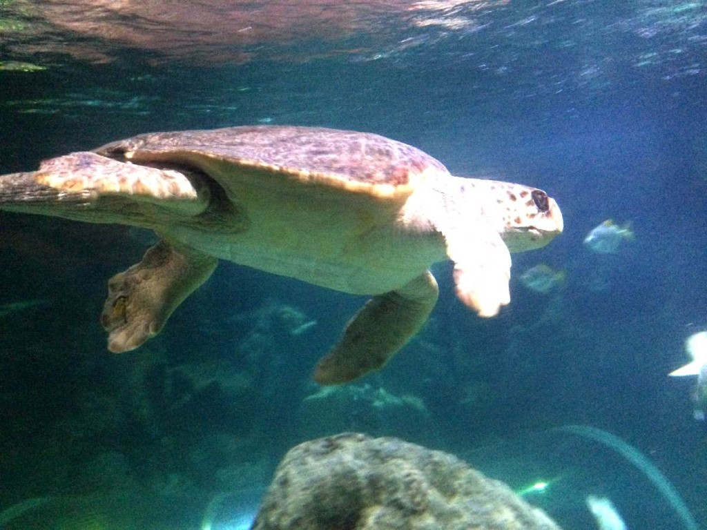 Forever Cornwall Newquay Aquarium Turtle