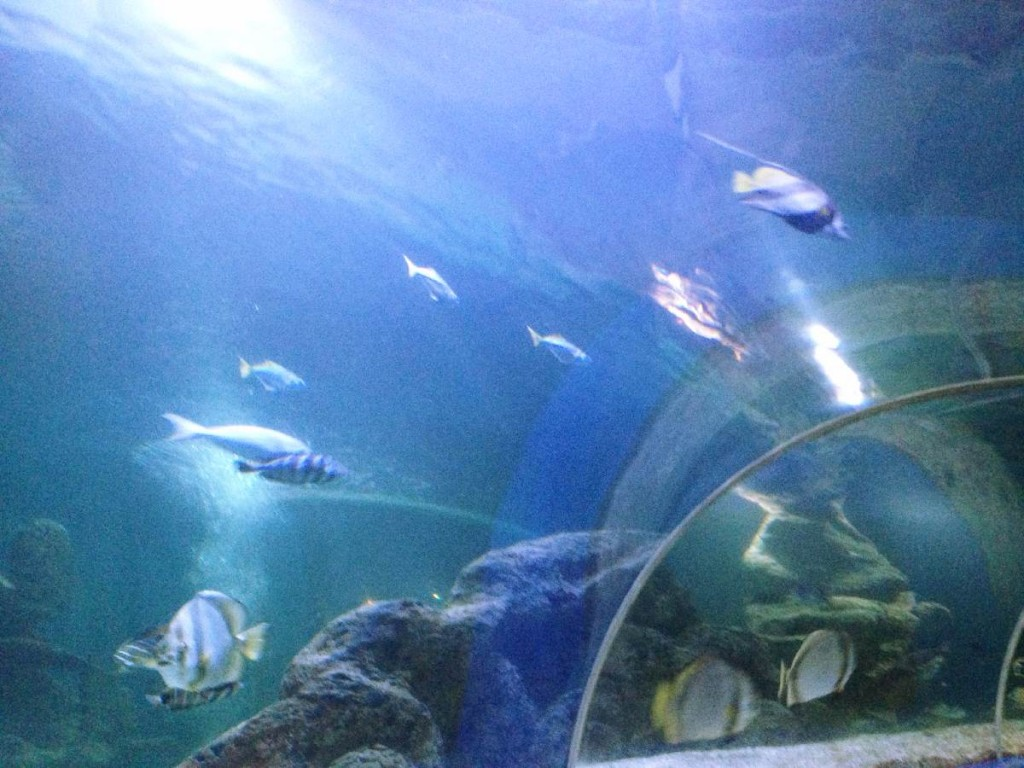 Forever Cornwall Newquay Aqurium Water Tunnel