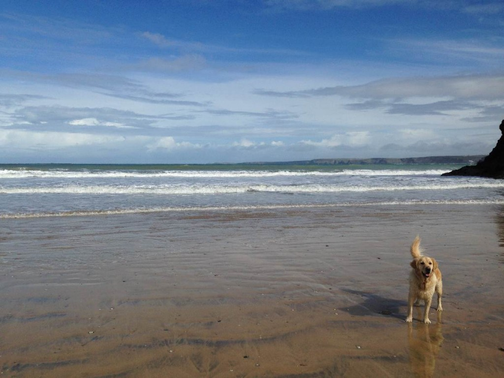Forever Cornwall Newquay Towan Beach Dog