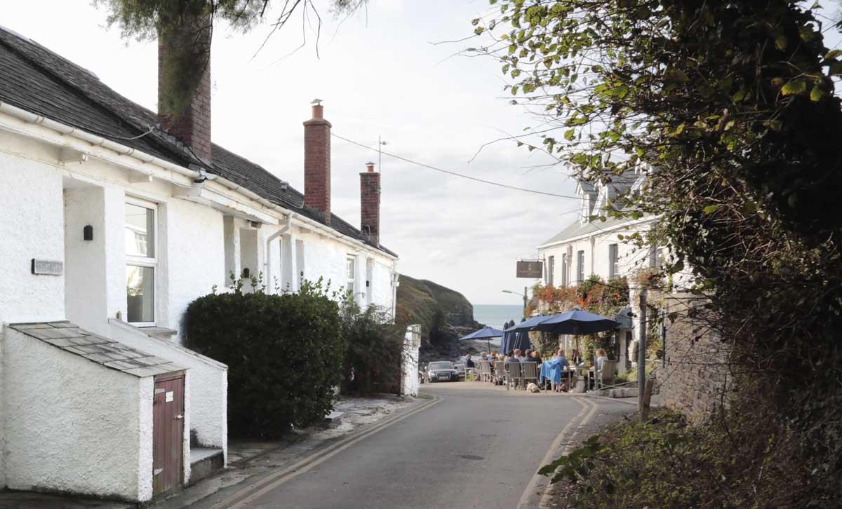Forever Cornwall Port Gaverne Marigold8