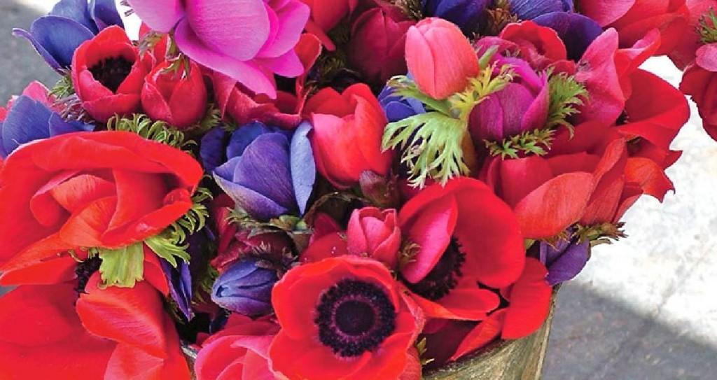 Forever Cornwall Porthleven Harbour Market Flower Stall