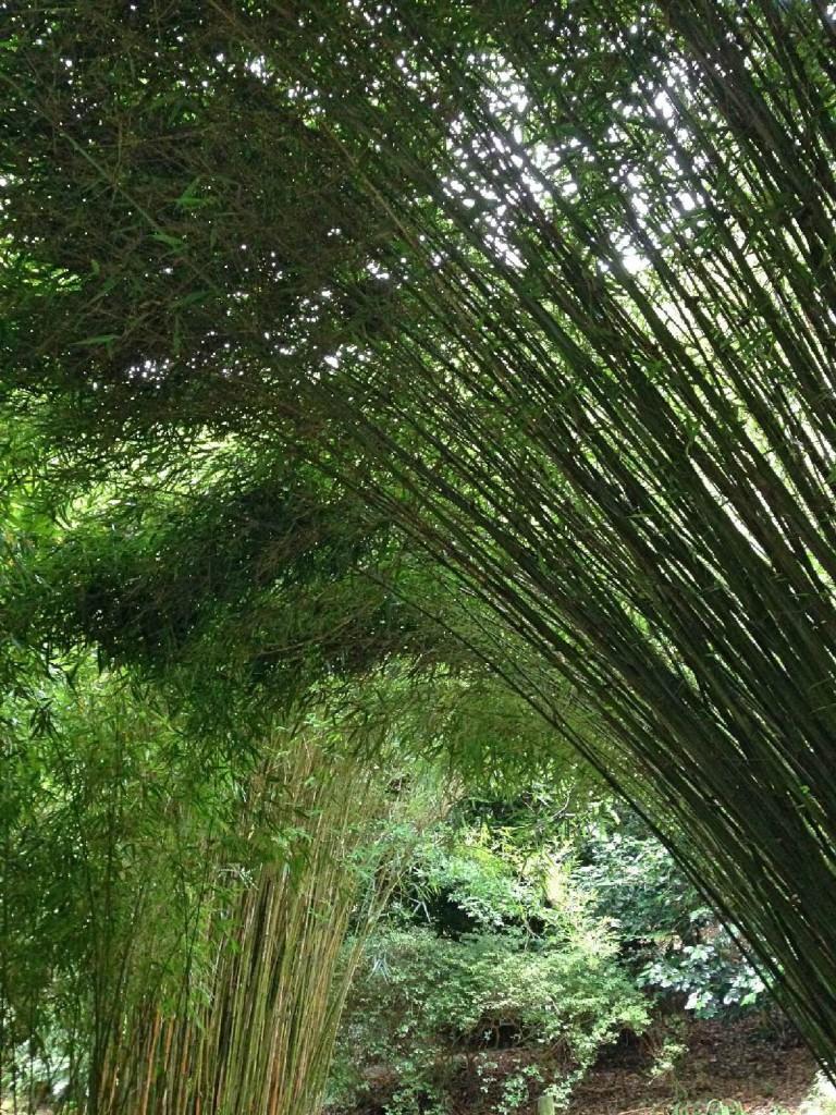 Forever Cornwall Trebah Bamboo
