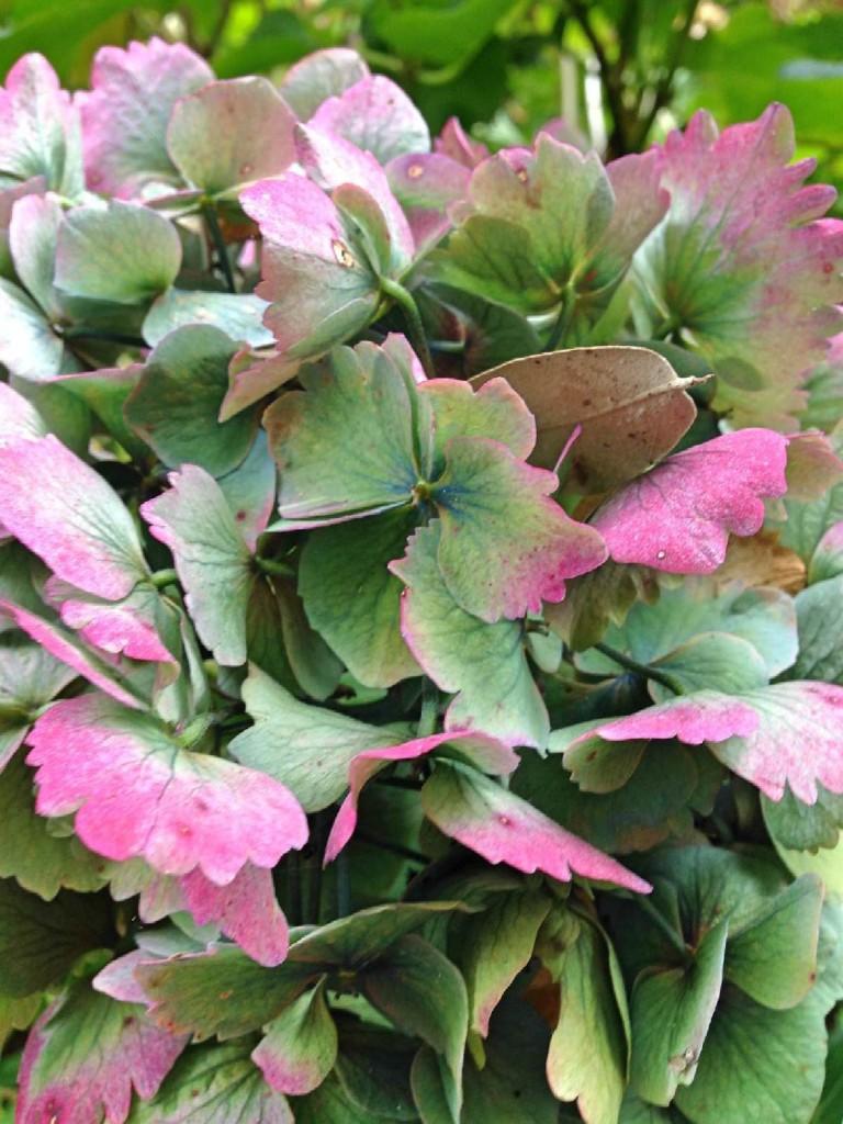 Forever Cornwall Trebah Flower
