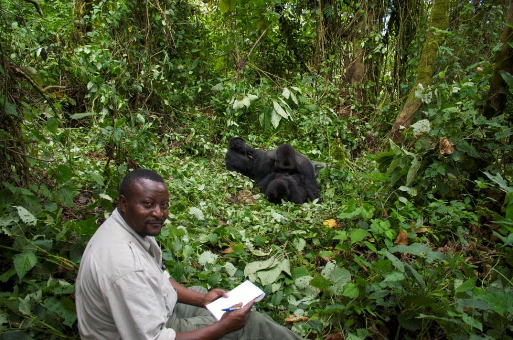 John Kahekwa With Two Gorillas
