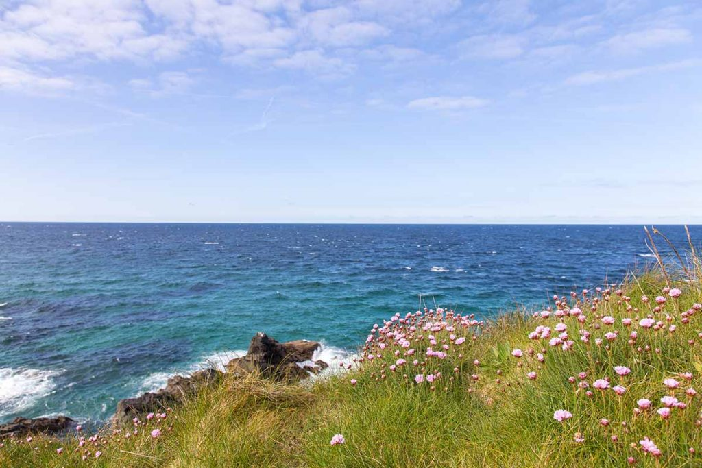 Sea Thrift At St. Ives *2*