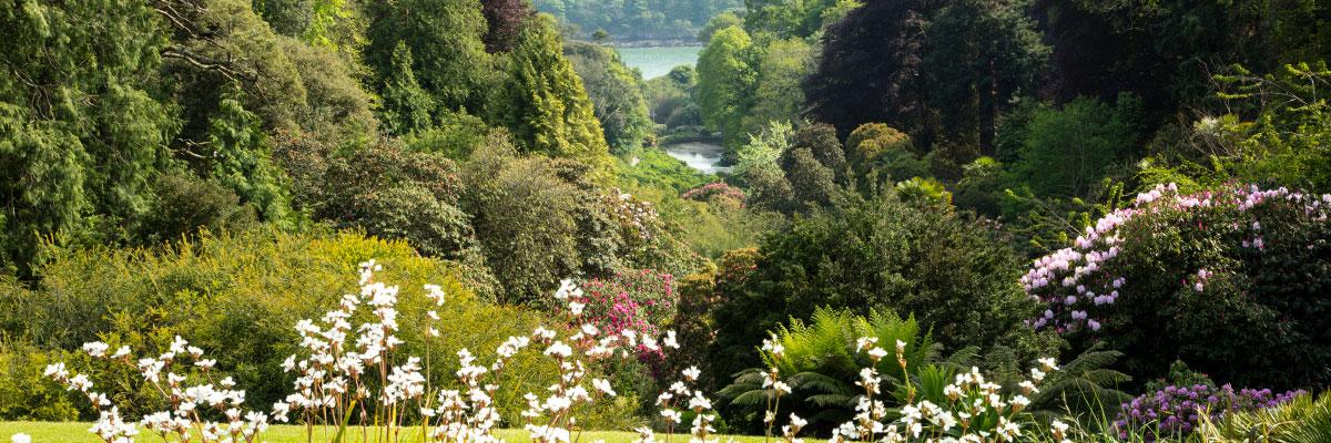 Trebah Gardens, The Helford