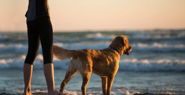 Dog Beach Cornwall Dog Friendly Holidays
