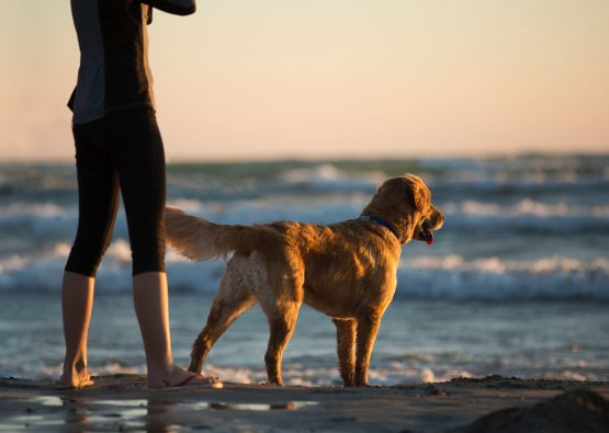 Dog Beach Cornwall Dog Friendly Holidays